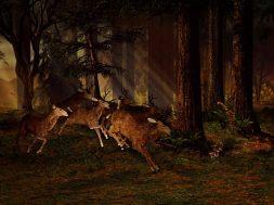 Que savoir sur les applications pour caméra de chasse
