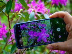 applications gratuites pour reconnaître les fleurs et les plantes